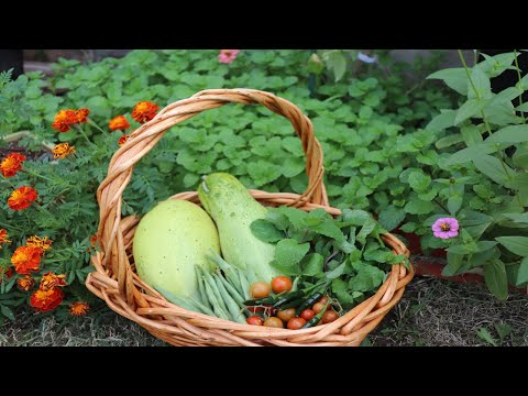 Joy of Gardening | Growing a Vegetable Garden in Backyard | City Gardening | Nepali Garden in USA