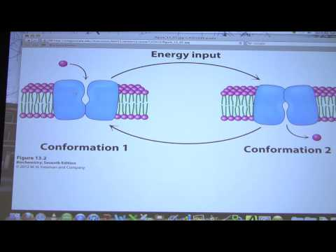 #31 Biochemistry Membrane Transport Lecture for Kevin Ahern's BB 451/551