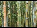The Property Show 11th Feb 2018 Episode 247 - Bamboo Farming