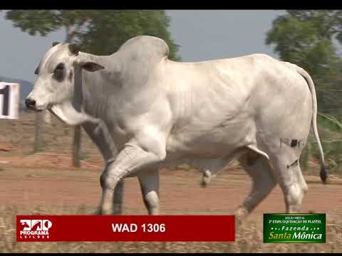 LOTE 21 - WAD 1306
