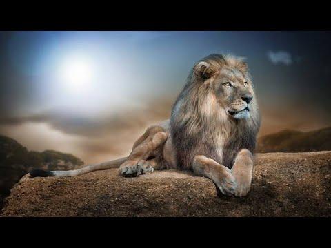 Lion Attitude Status For Boys 2018 Whatsapp Statusonly For