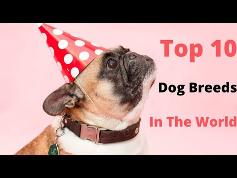Most Popular Dog Breeds in the World  1900 - 2019