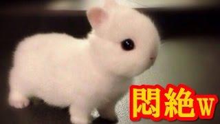 【かわいい小動物】室内で飼う派の人におススメめちゃかわ小動物9選