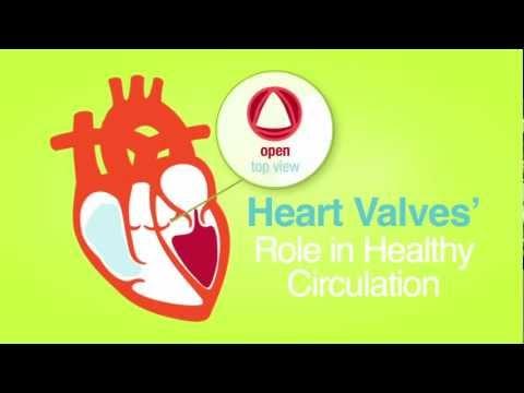Heart Valves Are For Life