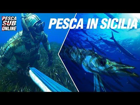 PESCA SUB Cefali nel Bassofondo - Tecniche di Pesca in 3 metri - Pesca subacquea - Spearfishing from YouTube · Duration:  10 minutes 2 seconds