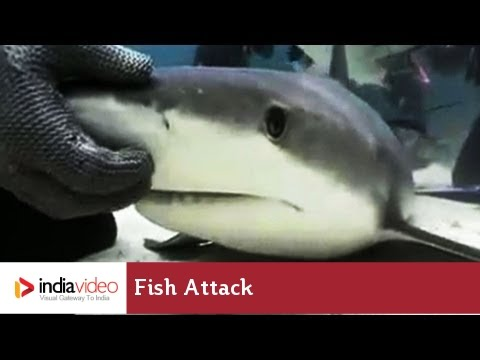 Fish attack during Scuba Diving