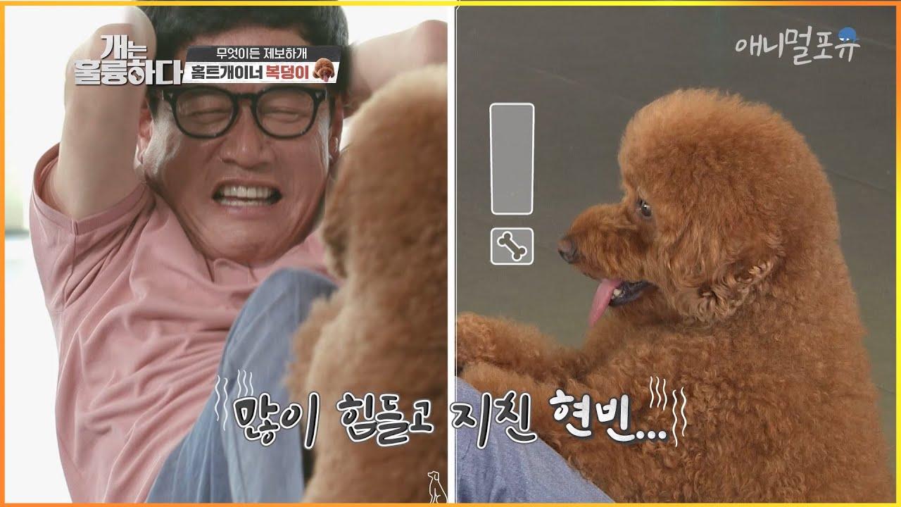 이경규를 (지친)현빈으로 만들어준 홈트개이너 복덩이!?!.. [개는 훌륭하다]