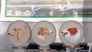 Сюжет о редкой собачьей породе- хортых борзых