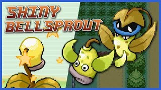 Live Shiny Bellsprout, Weepinbell & Victreebel 🌿 Pokémon Fire Red / Leaf Green [5,110 RE]