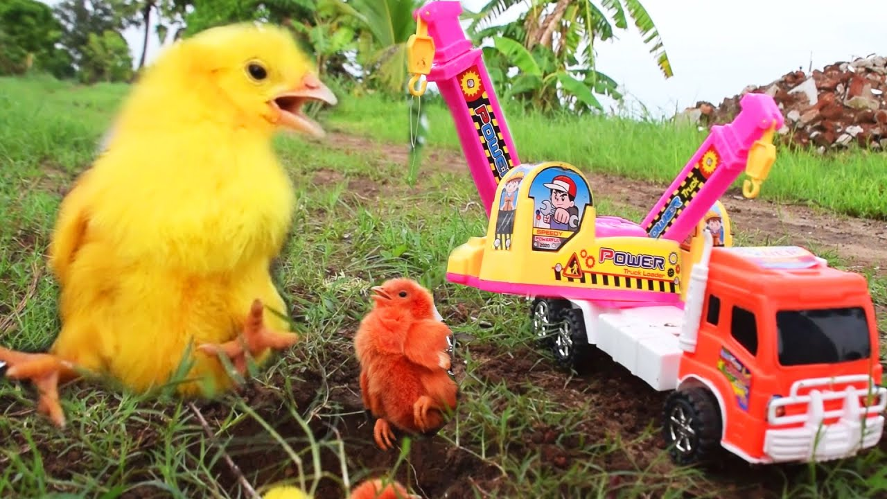 Rescue Trapped Hen Chicks with the help of JCB Toy Video | Murgi Chicks Vs. JCB / FishCutting