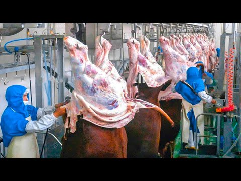 Amazing Workers Beef Meat Cutting - Inside The Meat Processing Plant