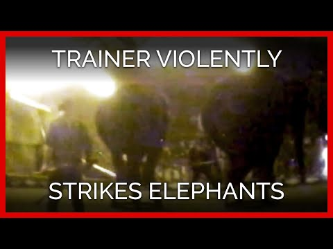 Carson & Barnes Circus Trainer Violently Strikes Elephants