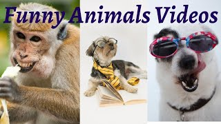 Funny Cat & Dog Vines compilation Funny KIDS vs ZOO ANIMALS Funny Babies And Animals Videos