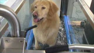 Canine Country Club, Hydrotherapy & Rehabilitation Centre