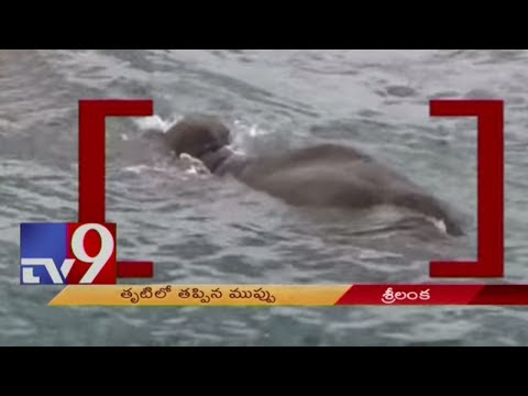 Sri Lankan Navy rescues elephant washed out to sea - TV9