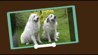 Клип про собак:Задумайтесь