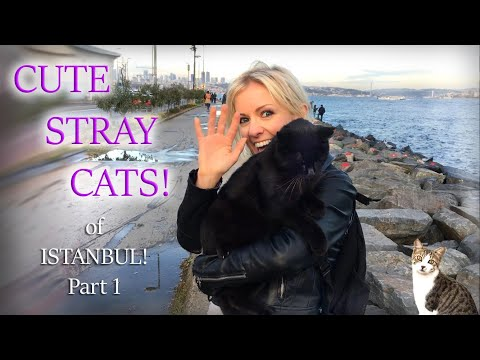 ISTANBUL SEA CATS! Stray CUDDLY KITTIES Living on The Marmar