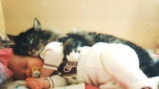 Cats And Babies ★ Cat Meets Baby For First Time HD Funny Pets