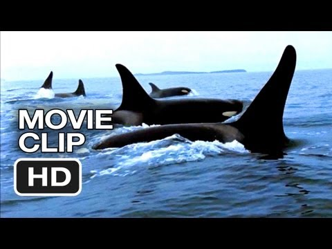 Blackfish Movie CLIP - Capturing Orcas (2013) - Documentary HD