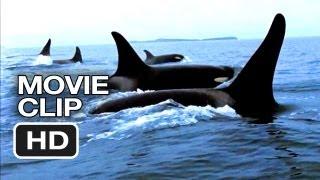 Blackfish Movie CLIP - Capturing Orcas (2013) - Documentary HD