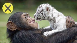 10 Extraños amigos animales