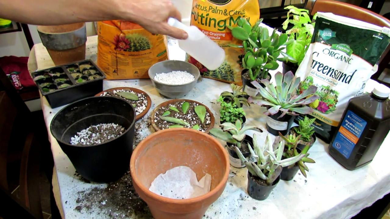 Transplanting Succulents & Dry Soil Mix Basics for Beginners: Houseplants &  Succulents E1-19: