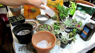 Transplanting Succulents & Dry Soil Mix Basics for Beginners: Houseplants & Succulents E1-19: