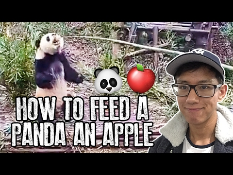 How To Feed A Panda An Apple #GlobalGoals