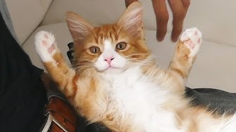 Best of Haku ♡ From kitten to weird cat!