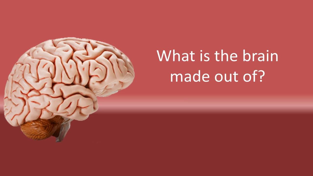 What is the brain made out of   YouTube