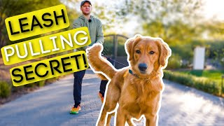 #1 TRICK TO STOP YOUR DOG PULLING ON THE LEASH!