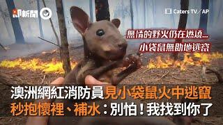 澳洲網紅消防員見小袋鼠火中逃竄 秒抱懷裡、補水|野火危機|燃燒|無尾熊