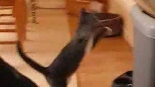 お前なかなかやるニャ! スパーリングする猫の一部始終を捉えた!