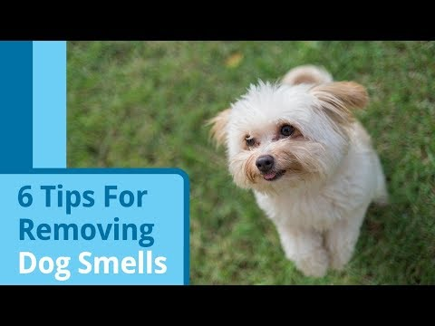 6 Tips for Getting Rid of Dog Smells