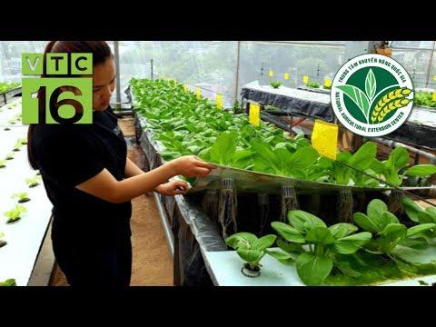 Độc đáo mô hình trồng rau không cần đất | VTC16