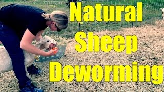 Deworming Sheep the Natural Way