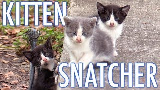 The Kitten Snatcher! - Cat Man Chris