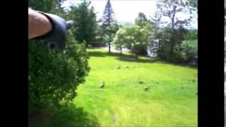 Canada Geese Roof Repair  6 6 14