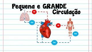 Coração sanguíneos menores vasos no