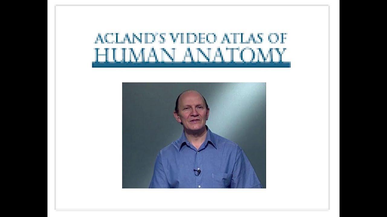 ATLAS DE ANATOMIA HUMANA - YouTube