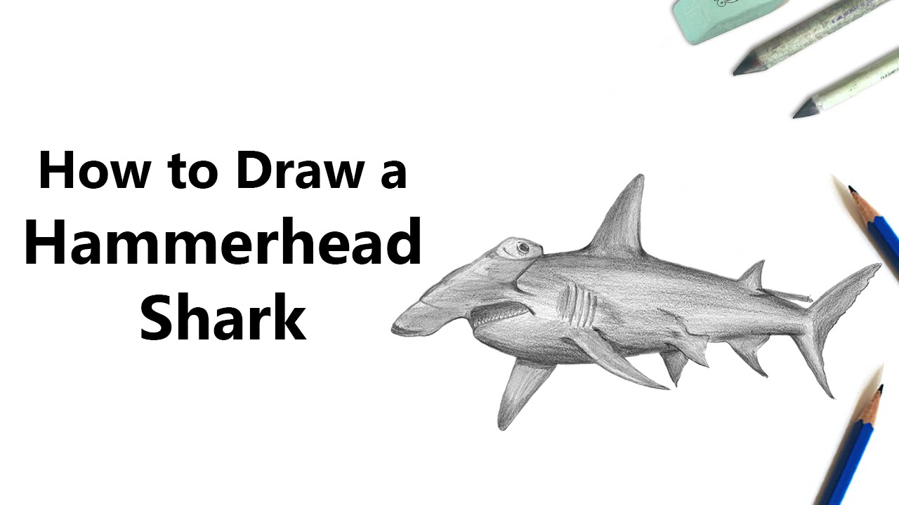 Uncategorized How To Draw A Tiger Shark how to draw a hammerhead shark with pencils time lapse youtube lapse