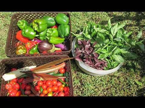 Organic Gardening ~ Harvesting 12 Types of Peppers & More ~ Making Garden Pizza