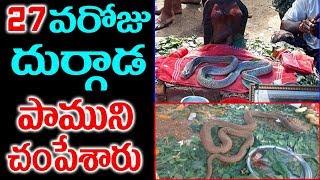 26 రోజులు పూజలందుకున్న పాముని చంపేసారు  Durgada Subramanyeswara god Snake story   Sumantv