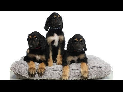 This is the reason why scientists cloned the first dog clone- ShockingTimes