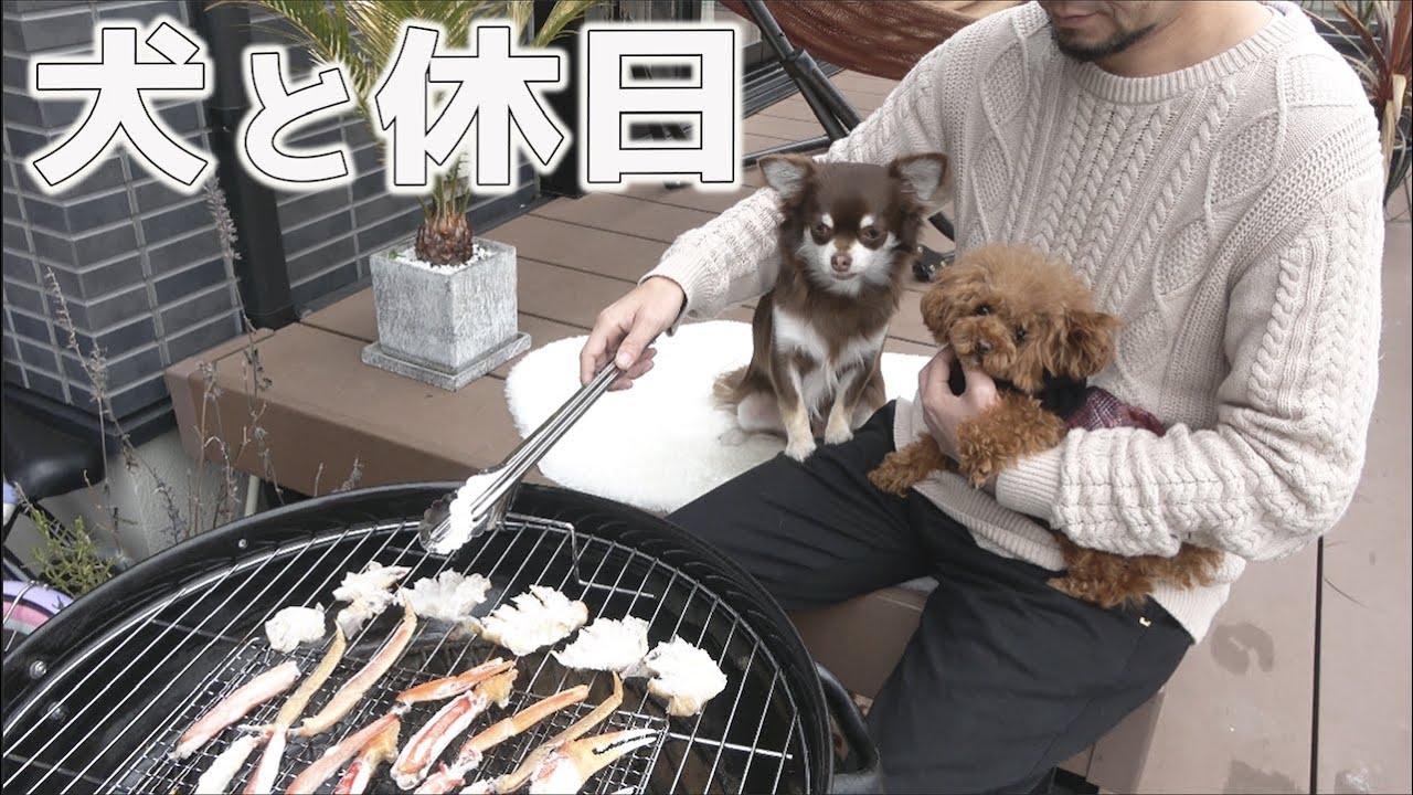 トイプードルとチワワとアラフォー社長のとある昼下がり 犬と過ごす休日