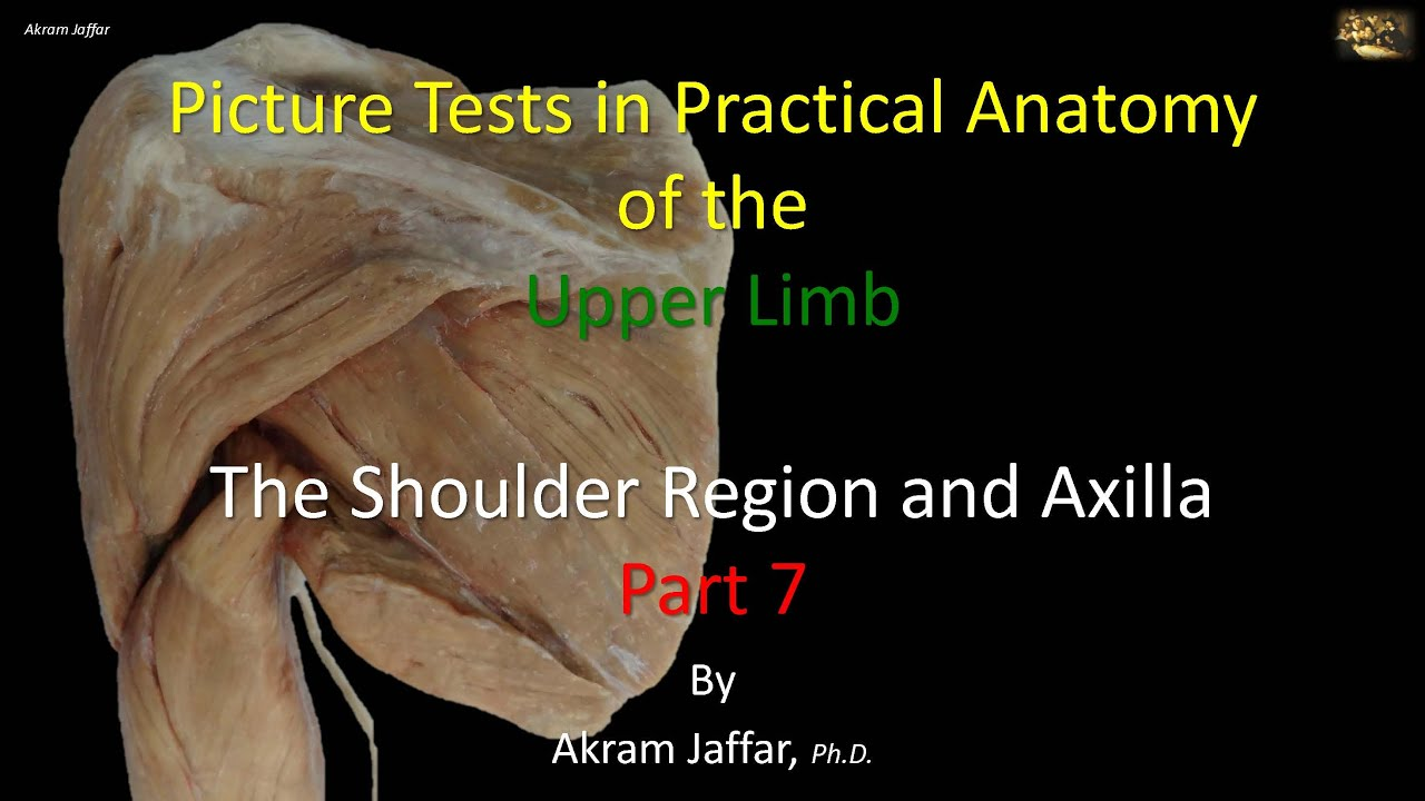 Picture tests in anatomy shoulder region and axilla 7 - YouTube