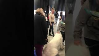 Edison, NJ Super Pet Expo