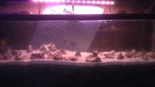 Jawfish Colony Project: #03