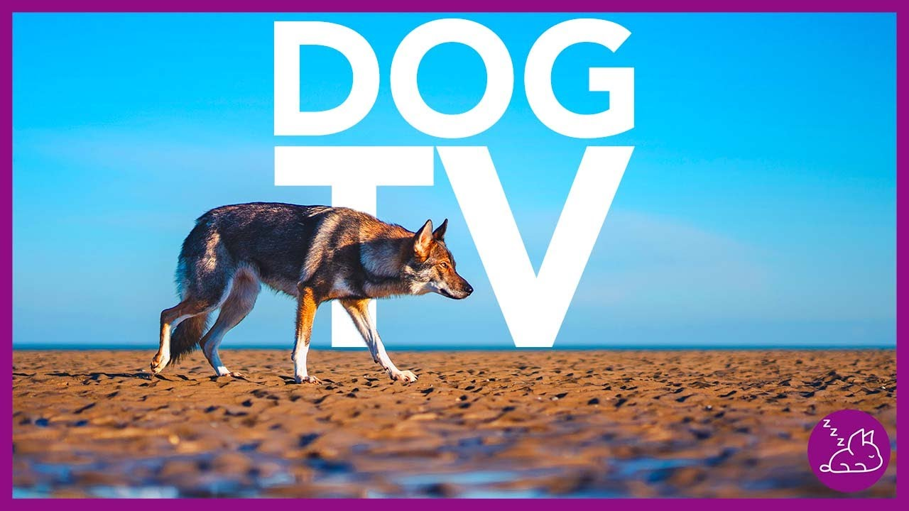 DOG TV - 15 HOURS OF ENTERTAINING VIDEOS FOR DOGS