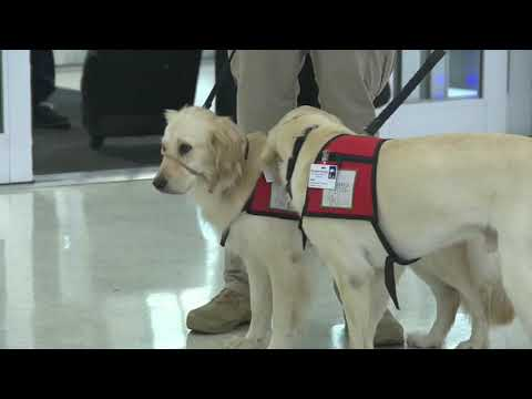 Hilary - Therapy dogs arrive in El Paso
